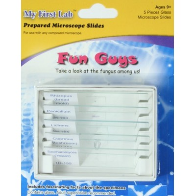 image of PS58 Fun Guys Prepared Slide Set