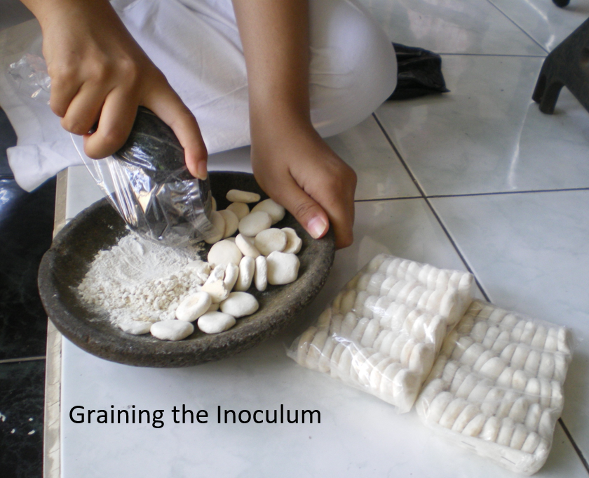 image of bioethanol science fair project graining the incolum