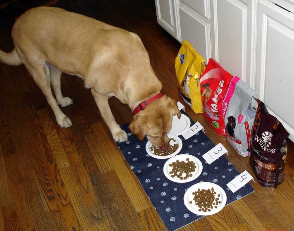 Science Fair projects on Dog Food