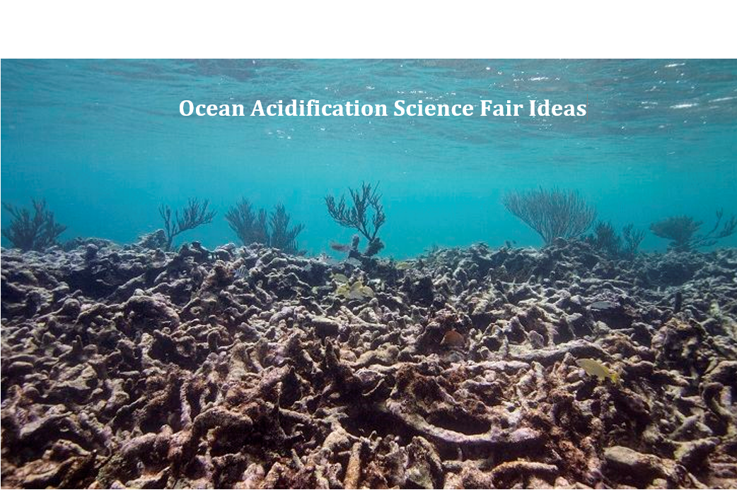Ocean Acidification Science Fair Ideas