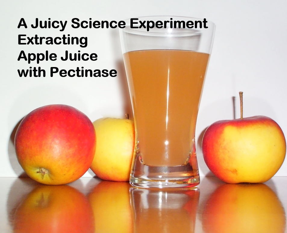 Science Experiment: Extracting Apple Juice w/ Pectinase