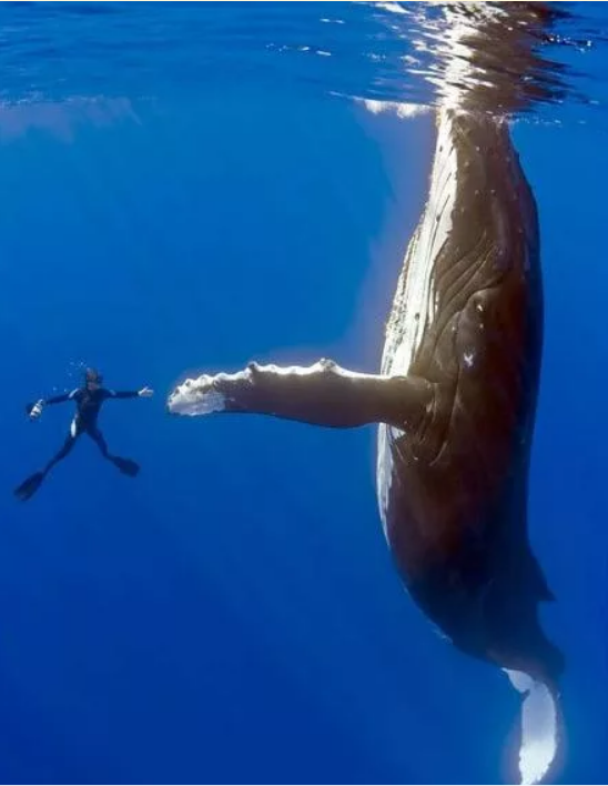 The Whale Who Said Thanks