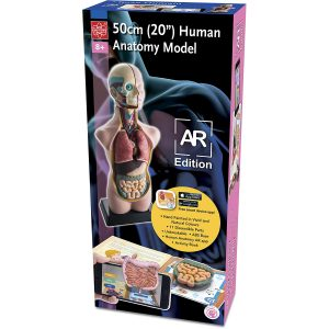 EDU-41007AR Human Body Torso Anatomical Model w/APP Box