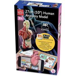 EDU-41006AR Human Body Model Anatomical Model for Classroom Science Fairs Homeschooling w/APP