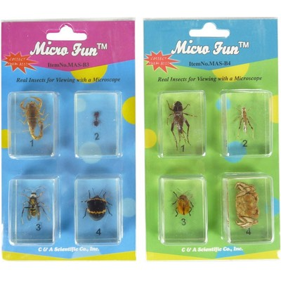 Micro Fun Bug Specimen Sets (total of 6 cards of bugs)
