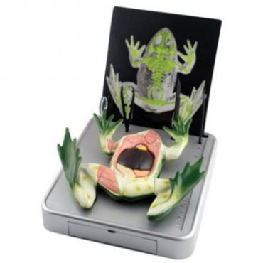 EDU-37307 Simulated Frog Dissection Kit by Science Tech
