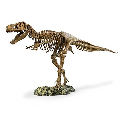 "EDU-37329 T-Rex Skeleton 36"" Scale by Science Tech"