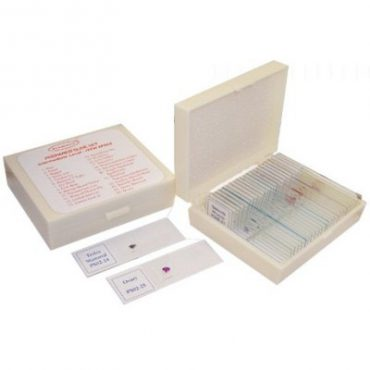 PS02 Prepared Slides Intermediate Level | Middle School Science Microscope Slides