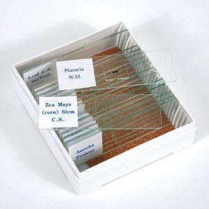 Biology Prepared Slide Mini Set (set of 16 slides)