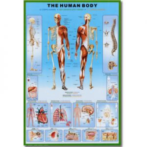 image of anatomy educational science posters