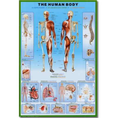 image of Anatomy Science Poster