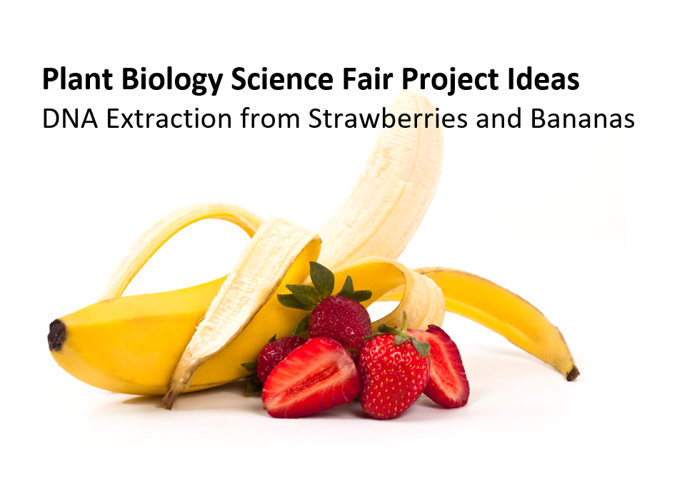 Plant Biology Science Fair Project Ideas