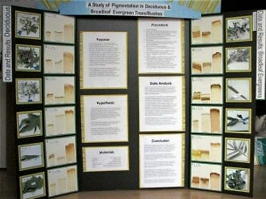 Evergreen Science Fair Project