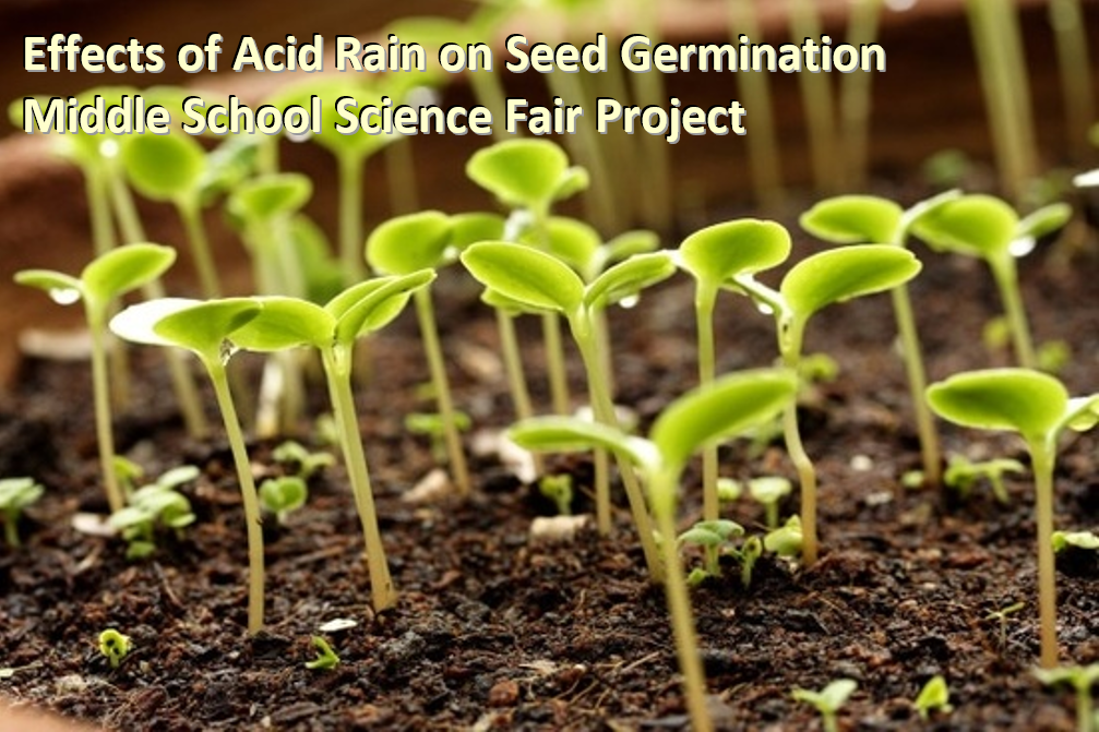 Effects of Acid Rain on Seed Germination Middle School Science Fair Project