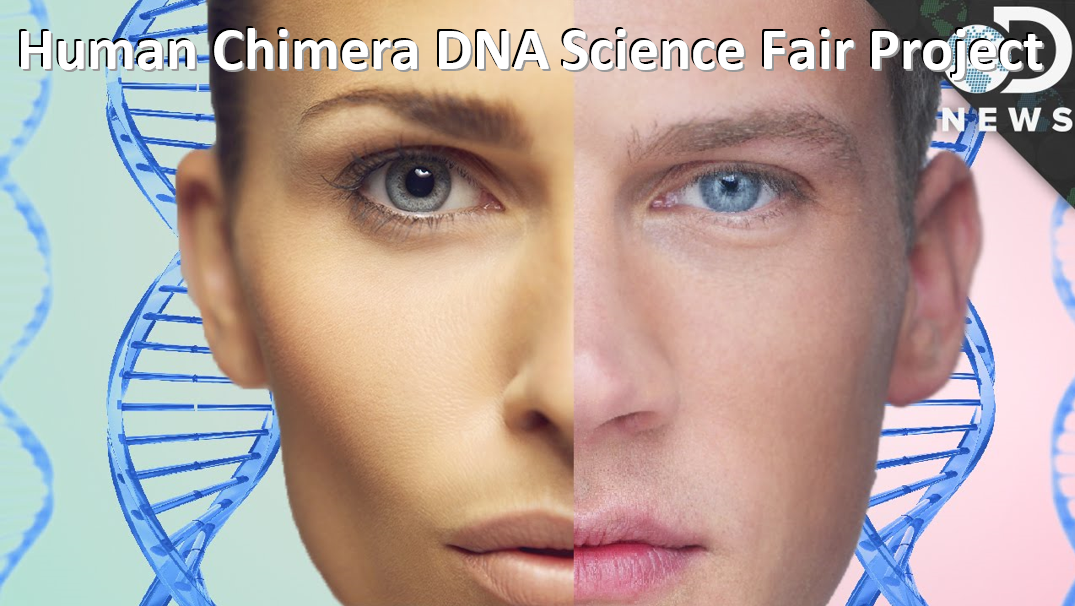 Human Chimera DNA Science Fair Project