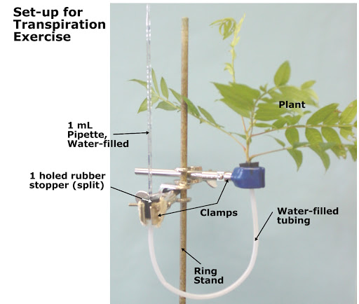 Biology Lab Tips for Transpiration